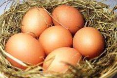 Frische Eier für das Tiramisu